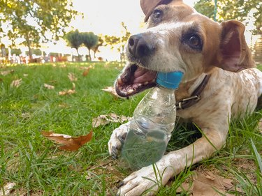 dog bite plastic botlle of water - recycle idea