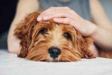 Woman stroking her pet dog