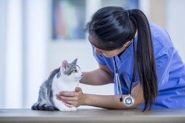 Vet With Cute Cat