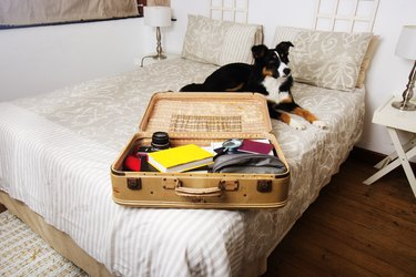 dog lying on bed next to suitcase