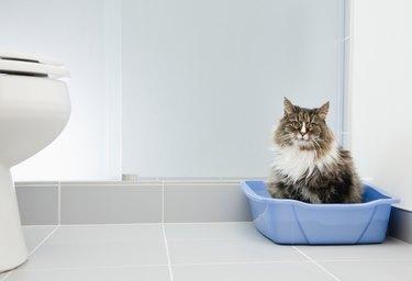 cat in litter box in bathroom
