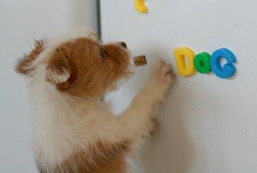 Puppy dog magnets