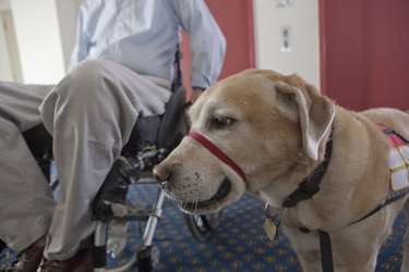 Service dog with a man in a wheelchair leaving the elevator