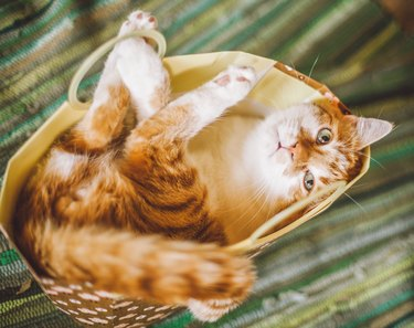 High Angle View Of Cat Lying In Basket