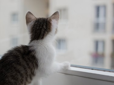 Closeup picture of a cute kitten looking through the window