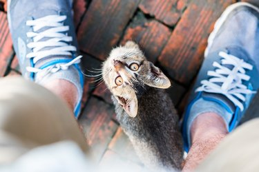 Young cat begging