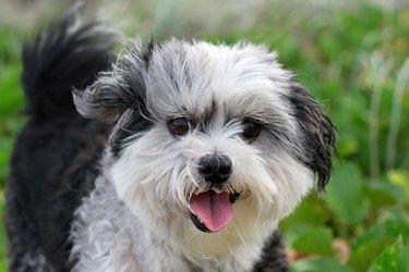 Cute Fluffy Dog Close Up Happy Face Among Beach Foliage