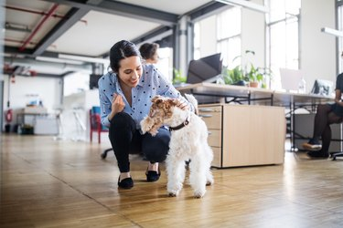 Cheerful businesswoman crouching by dog at office