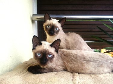 Portrait Of Cats Sitting On Bed At Home