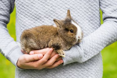 Beautiful small rabbit bunny in girl's hands.