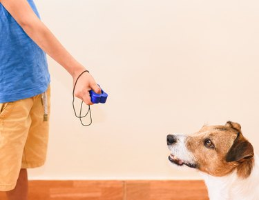 man using clicker to train his dog, pointing clicker at the dog
