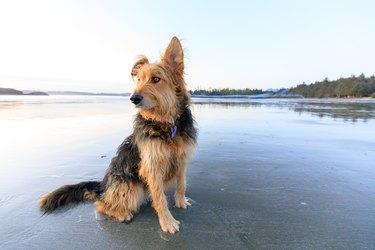 Wookiee on McKenzie Beach