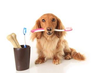 Dog and toothbrush