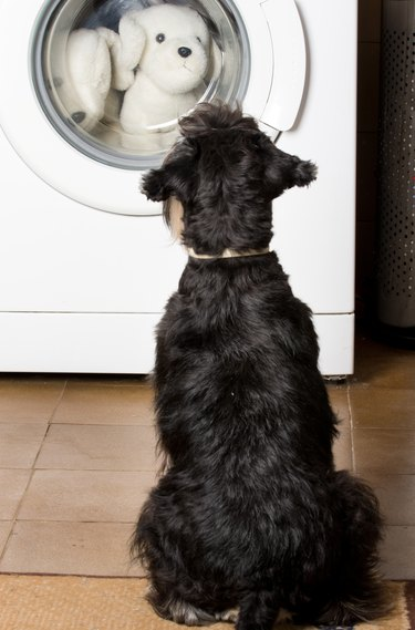 Dog looking at washing machine with stuffed dog toys inside