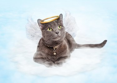 Cat Angel on Cloud in Heaven
