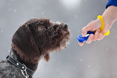 young hunting dog and hand with clicker