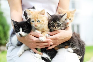 Person holding little cats in arms.