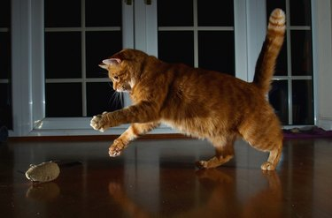 Red cat catching toy mouse