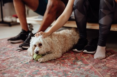 Owners petting dog with tennis ball in his mouth