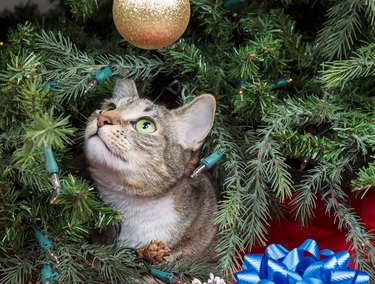 Close-Up Of Cat in Christmas Tree