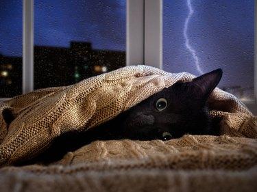 Cat scared of thunder and lightning outside the window. Kitten hiding under the blanket