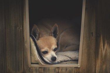 Sad dog inside a booth