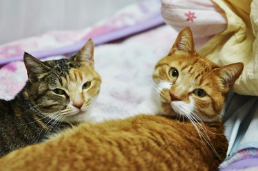 two cute cats lying on bed
