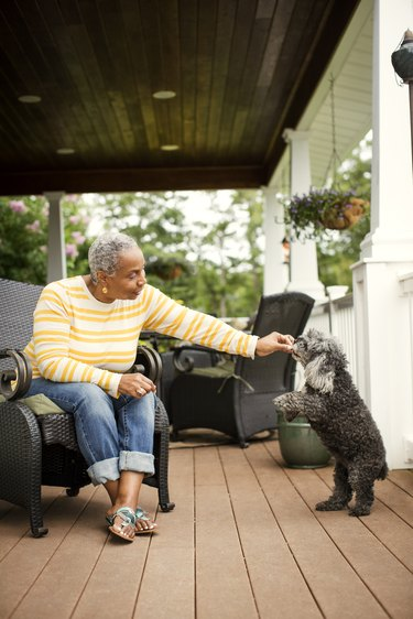 Happy woman feeding poodle while sitting on armchair in porch