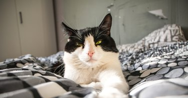 black and white cat lying on bed