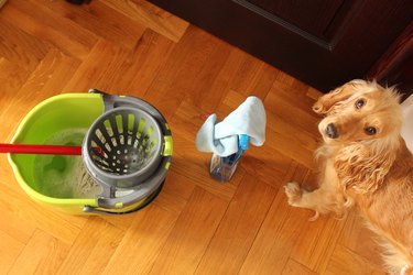 dog standing next to bucket of cleaning supplies