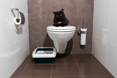 black cat sitting on the toilet