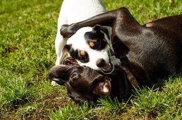 Dog hugs - Cute Dogs smiling playing together