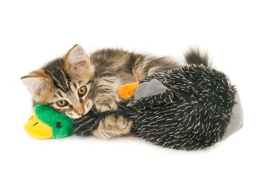 Kitten playing with a toy duck