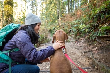 Eurasian Young Woman Pets Vizsla Dog on Forest Hiking Trail