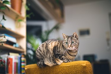 Cat Relaxing On Sofa