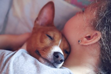 The girl hugs the basenji dog, toned, close up.