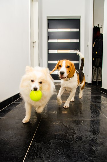 Two dogs running indoors playing together