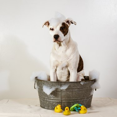 Dog in a Bath Tub with Bubbles