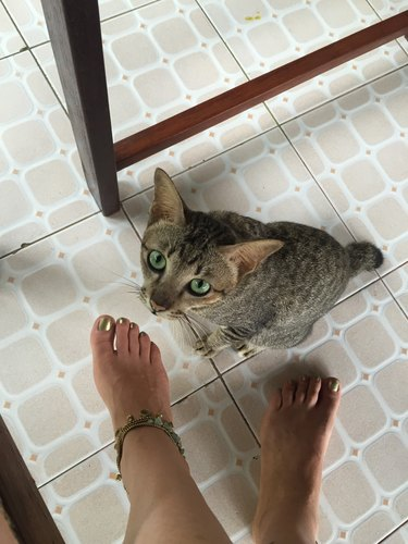 Low Section Of Woman By Cat On Floor At Home