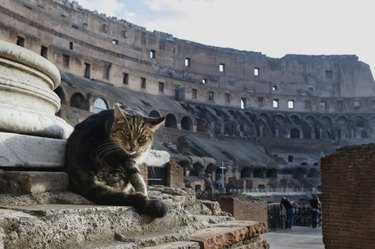 Cat in Coliseum