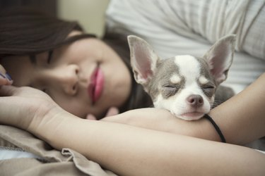 Ralaxation concept. Beautiful woman sleeping with her cute dog on bed in lazy Sunday.