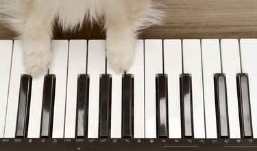 Dog playing the piano,wood background. Dog paws on the piano. Top view two dog paws on midi piano compact wireless keyboard mixer plays melody.