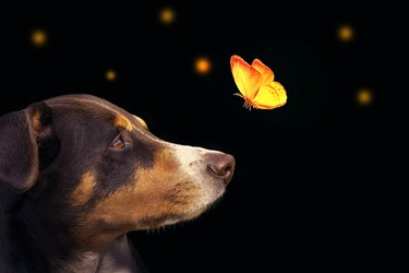 dog with butterfly over his nose