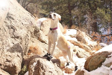 Dog On Rock During Sunny Day
