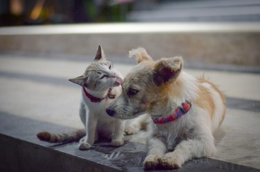 Cat and dog family