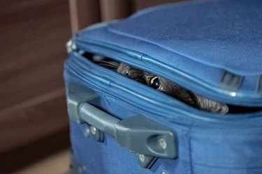 Funny cat hides into a suit case. Travelling holiday concept