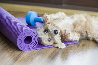 dog resting on yoga mat next to weights