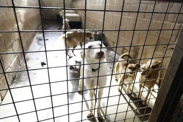 Sad abandoned dogs