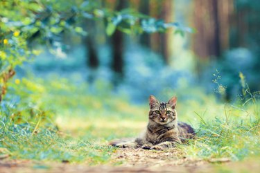 Cat lying in the forest