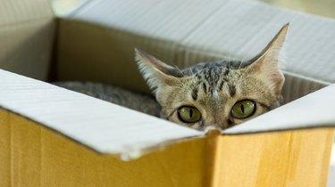 Cute gray striped cat lying in a box.